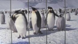 ENSAC, Museo dell'Antartide, Siena